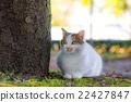 猫 杂色猫 哺乳动物 22427847