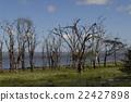 แอฟริกา,ทุ่งหญ้า,ธรรมชาติ 22427898
