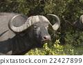 แอฟริกา,ธรรมชาติ 22427899