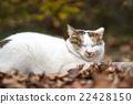 轻松 放松 杂色猫 22428150