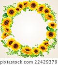 向日葵 花朵 花 22429379