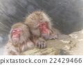 猴子 猴 溫泉 22429466