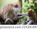 Real Mother monkey and baby monkey 22438188