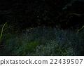 firefly, lightning, bug 22439507