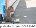 monkey is sitting in temple 22441669