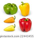 pepper healthy vector 22443455