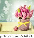 Purple tulips 22444992