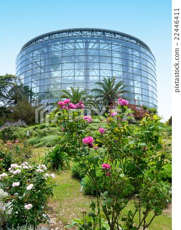 삼양 미디어 플라워 박물관 (치바시 꽃의 미술관) 장미와 온실 (5 월) 치바현 치바시 22446411