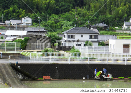 Season of rice planting 22448753
