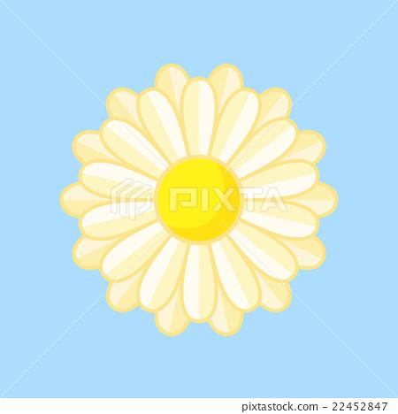 White Flower 22452847