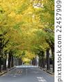 ginkgo, ginko tree, den'enchofu 22457909