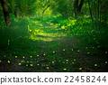 ต้นไม้,ป่า,แมง 22458244