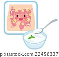 乳酸菌 酸奶 小腸 22458337