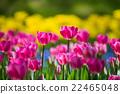 bloom, blossom, blossoms 22465048