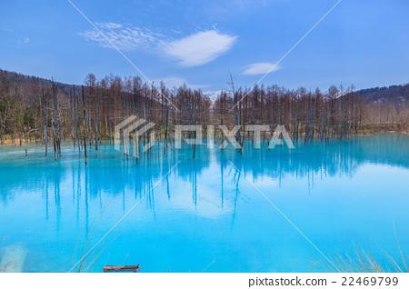 Stock Photo: blue pond, aoiike, deadwood