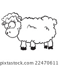 sheep 22470611