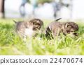 노는 새끼 고양이 22470674