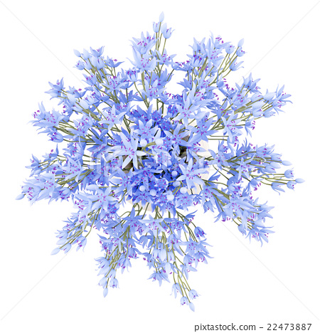 top view of blue flowers in vase isolated on white 22473887