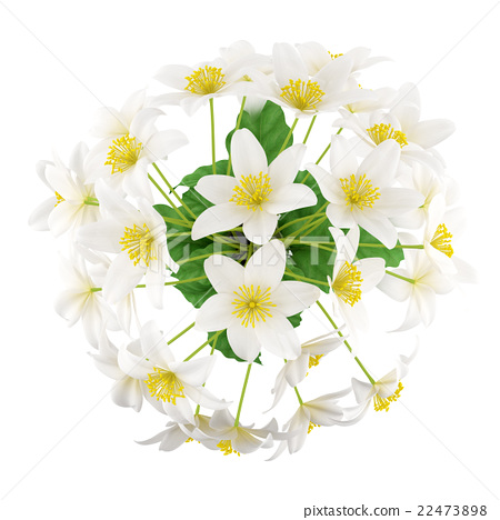top view of flowers in vase isolated on white - Stock Illustration Flower Vase Top View on umbrella top view, desk top view, tree top view, couch top view, table top view, plate top view, sculpture top view, rug top view, bedroom top view, spoon top view, apple top view, box top view, plant top view, rose top view, stool top view,