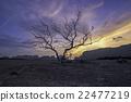 Dead Tree 22477219