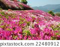 อาซาเลียแห่งภูเขาไฟฟูจิย้อมสีชมพูภูเขา 22480912