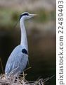 鸟儿 鸟 白鹭 22489403