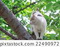 猫 爬在树上 杂色猫 22490972