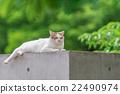 猫 春 春天 22490974