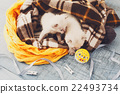 White Newborn kittens in a plaid blanket 22493734