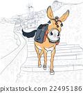 Donkey in Oia, Santorini 22495186