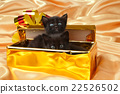 猫 猫咪 婴儿 22526502