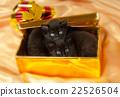 猫 猫咪 婴儿 22526504