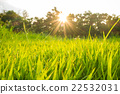Green grass background texture 22532031