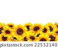 向日葵 植物 植物学 22532140
