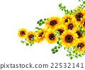 向日葵 植物 植物学 22532141