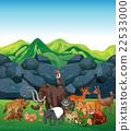 wildlife, animal, nature 22533000