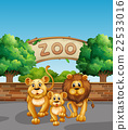Lion family in the zoo 22533016