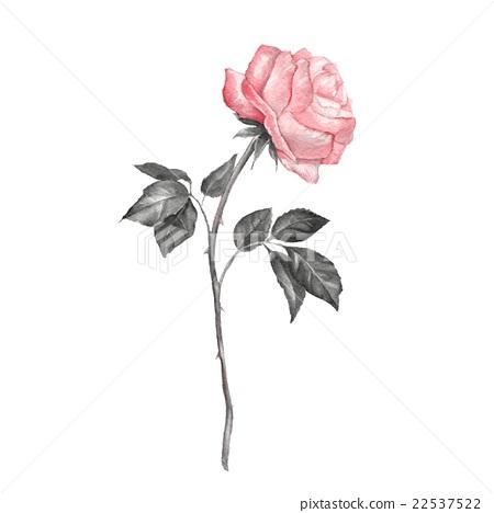 Single Rose Watercolor 2