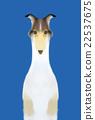 動物 狗 狗狗 22537675