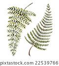 nature fern illustration 22539766