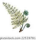 vector spring fern 22539781