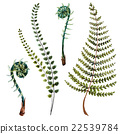 vector green fern 22539784