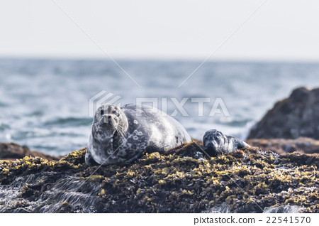 Zenigata Seals 7 22541570