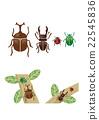 牙買加犀金龜 鍬形蟲 鋤頭形頭盔 22545836