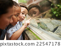Looking at lizard 22547178