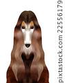 动物 狗 狗狗 22556179