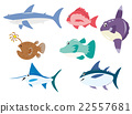 魚 海中的魚 鯊魚 22557681