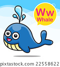 W Whale color cartoon and alphabet for children 22558622
