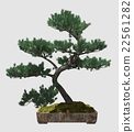 3D Illustration Bonsai Tree Isolated On White 22561282