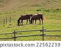 animal, animals, equine 22562239
